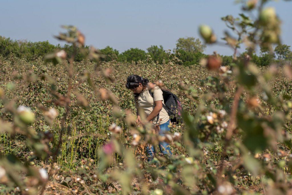 campo de algodón con mujer